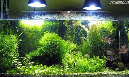 Appunti di un acquario designity 39 s blog for Comprare un acquario