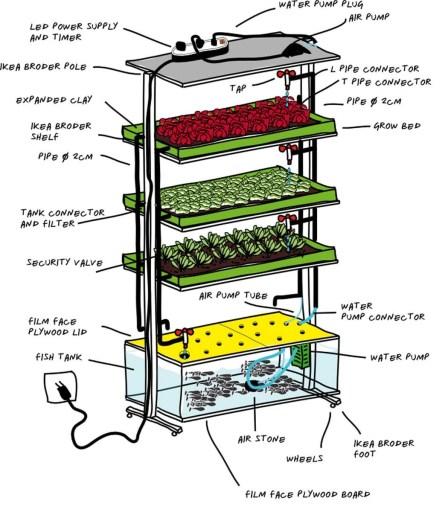 acquaponica cos'è e come funziona il ciclo dell'azoto pesci e piante con la stessa acqua