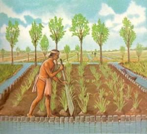 """Qual'è la storia dell'acquaponica? Storia e utilizzi dell'acquaponica. Com'è nata? Quali sono i suoi utilizzi? nella Valle del Messico, si utilizzavano delle """"isole agricole"""". Gli indigeni Nahua del lago Xochimilco utilizzavano un concetto diverso. Consisteva nell'usare una tecnica che chiamavano Chinampa. In tale modo questo consentiva ai mesoamericani di utilizzare piccole aree rettangolari di terra arabile e fertile. Queste venivano create puntellando il fondo del lago con dei paletti. In questo modo si creava una forma rettangolare e l'area così delimitata, veniva poi riempita con fango, sedimenti del lago e vegetazione in decomposizione."""