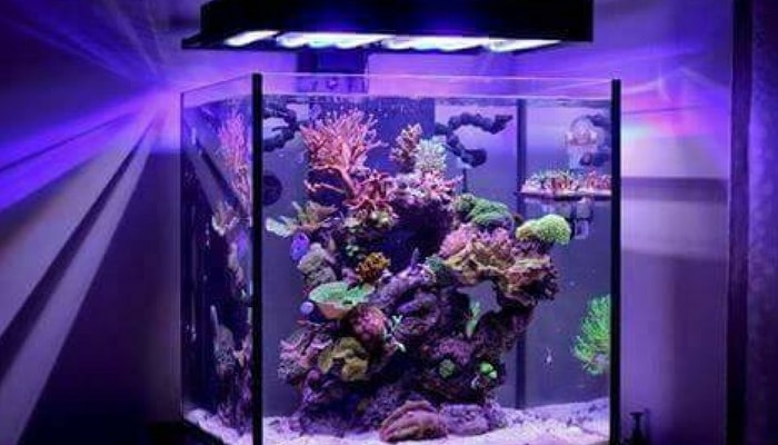 Plafoniere Per Nanoreef : Motivi per non denigrare un nano reef acquario come fare