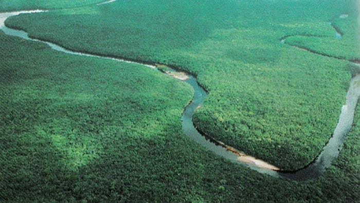 Delta Orinoco: dove vive la carnegiella stringata