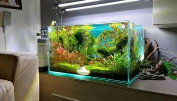 L Importanza Del Mobile Per Acquario Acquario Come Fare