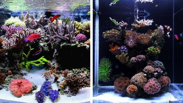 Nano reef per principianti la guida completa per iniziare subito