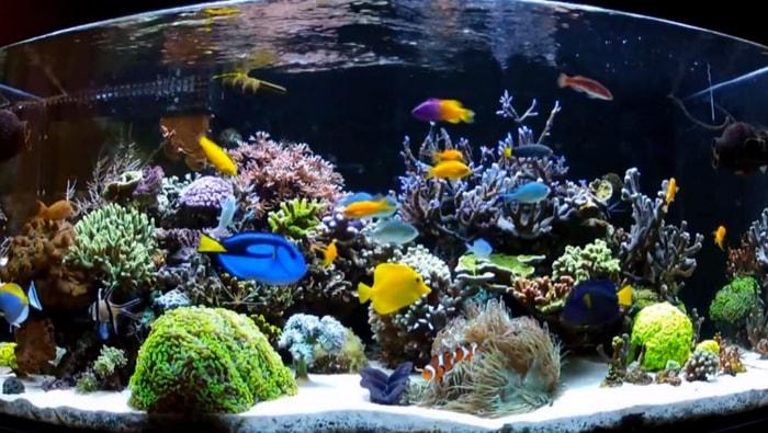 Quale substrato scegliere per il tuo acquario marino