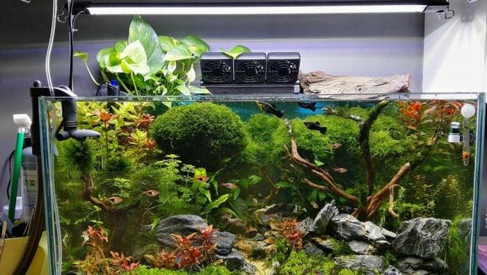 pothos in acquario