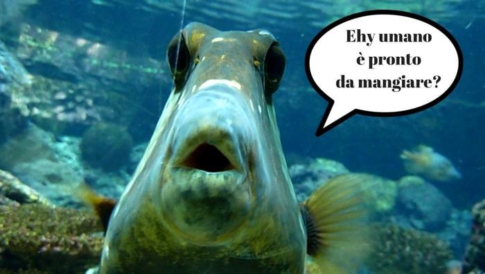 Come e quando alimentare i pesci marini