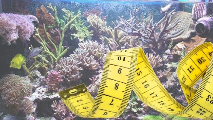 Come stimare la giusta misura dell'acquario in base ai pesci