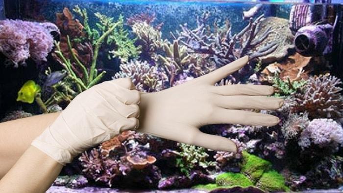 manutenzione dell'acquario in 6 passi