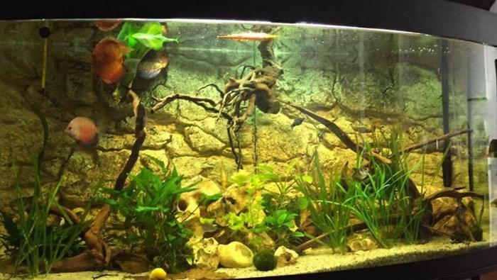 Plafoniere Acquario Acqua Dolce : Illuminazione acquario acqua dolce come fare