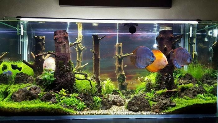 acquario discus artigianale 6