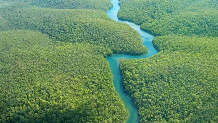 Rio delle Amazzoni: l'habitat naturale del discus