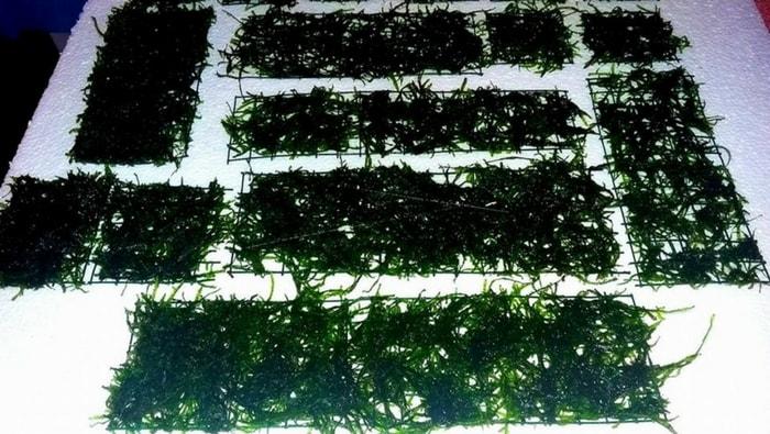 Prato in Java Moss