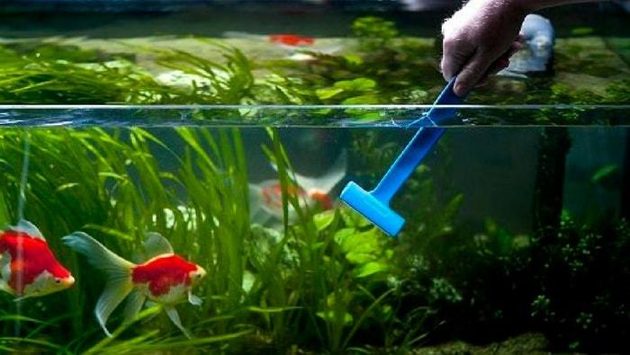 foto acquario - vetro