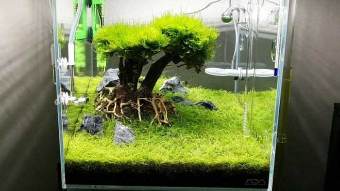 Albero acquario