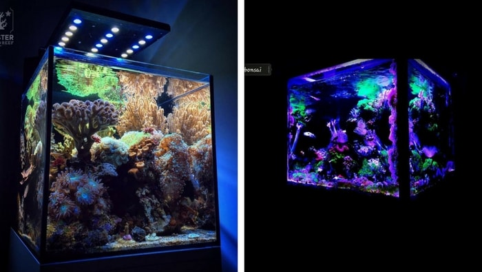 Plafoniera Led Per Acquario Acqua Dolce : Nano reef per principianti la guida completa iniziare subito