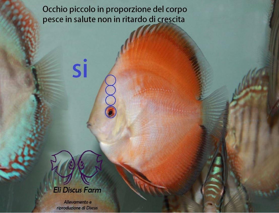Incontri online un sacco di pesce