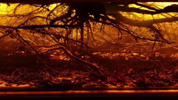 Biotopo acque nere Amazzonia