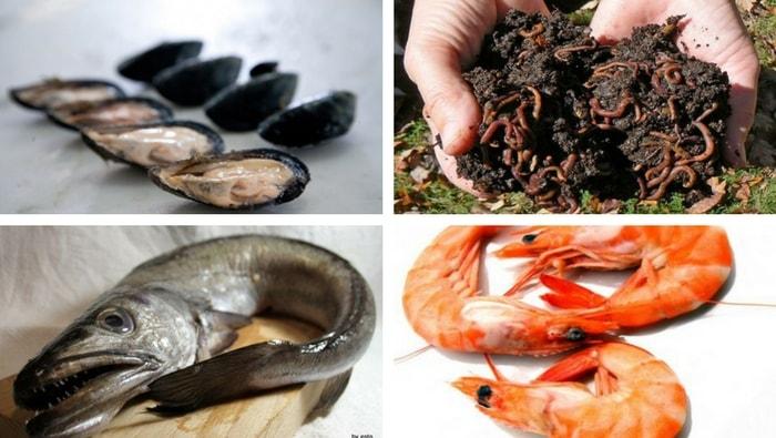 Cibo per pesci fatto in casa carnivori