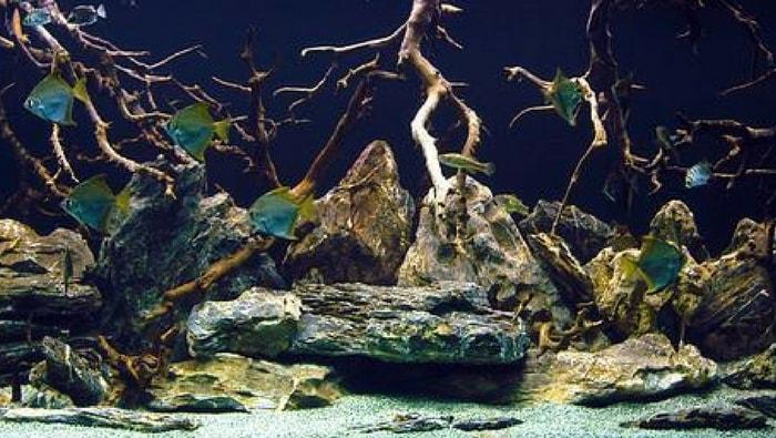 acquario salmastro
