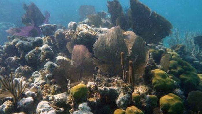biotopo Mar dei Caraibi