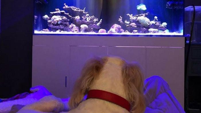 9 motivi per cui scegliere un pesce come animale da compagnia