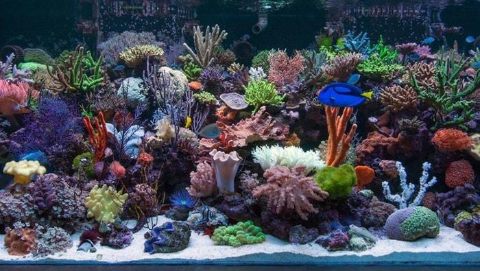 guida coralli