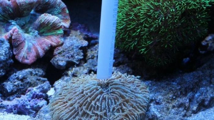 nutrire i coralli, la guida