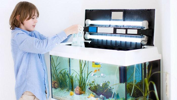 Inserimento pesci in acquario: acclimatamento pesci