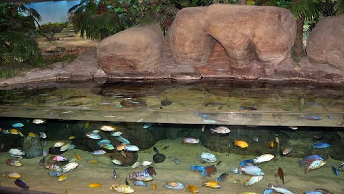 biotopo lago vittoria