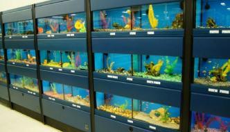 Negozianti di acquariofilia: onesti o truffatori?