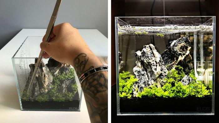 piante pico acquario