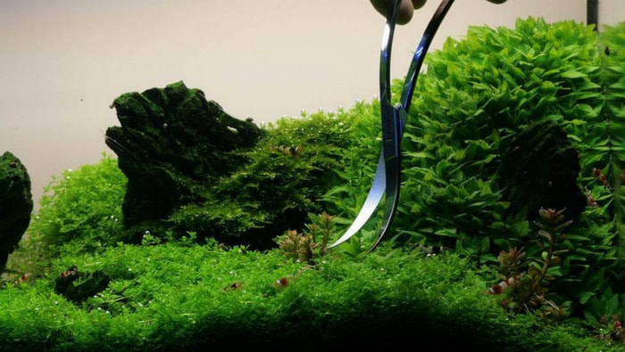 potatura delle piante
