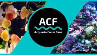 Gruppi Facebook di acquariofilia: le community dove condividere la propria passione