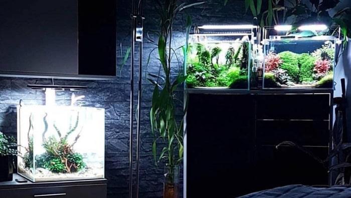 Risparmiare denaro in acquariofilia: ecco alcuni trucchetti che ti aiuteranno