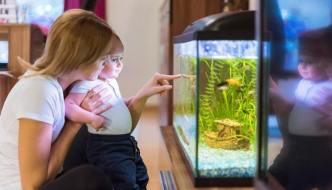 Acquario per bambini: guida su come far affacciare un giovanissimo o adolescente nel mondo dell'acquariofilia in maniera consapevole