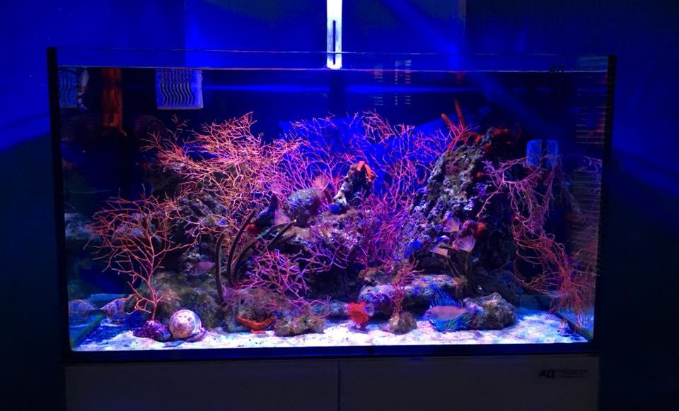 gorgonie in acquario