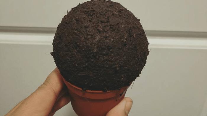palla di substrato