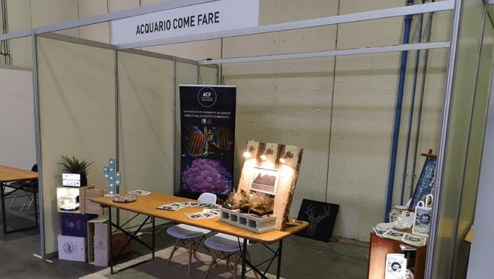 stand ACF