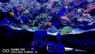 100 Acropore e 80 pesci in acquario marino? La vasca di Roberto Ferrara