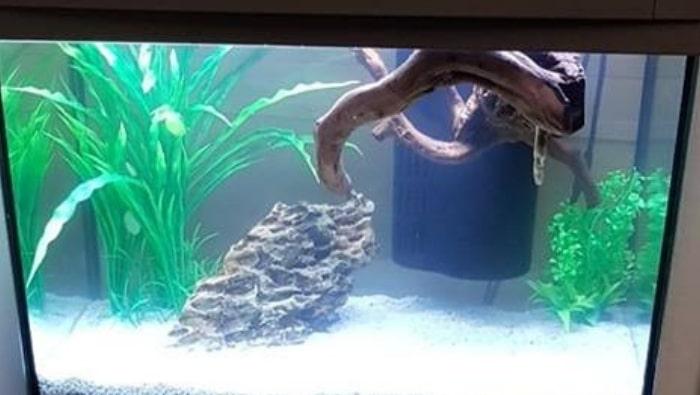 Legni galleggianti in acquario: come far affondare legni e radici in vasca