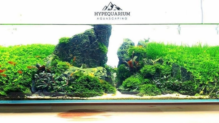 aquascaping hype