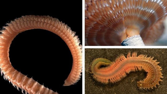 vermi in acquario marino