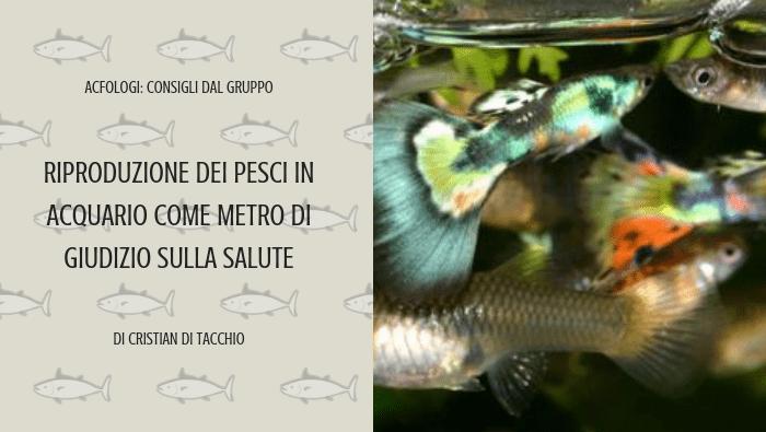 Riproduzione dei pesci in acquario