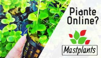 piante da acquario online