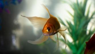 maltrattamento animali pesce rosso