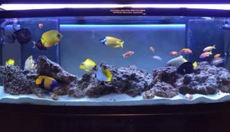 acquario marino solo pesci