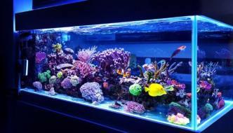 Pesci marini tropicali