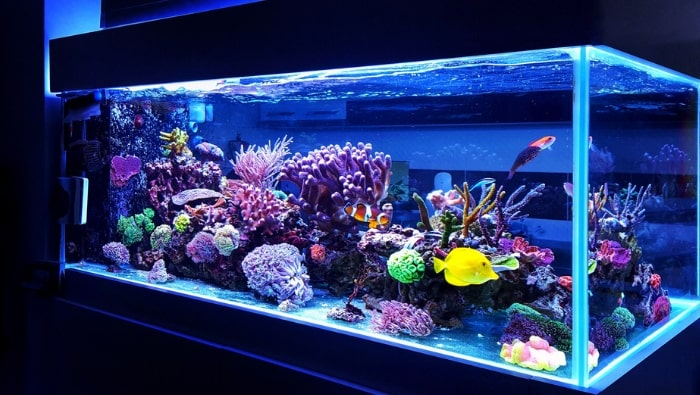 Pesci marini costi