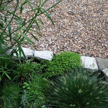 seaside garden in the suburbs - shells in the garden instead of pebbles or stones (16)