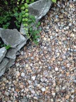 seaside garden in the suburbs - shells in the garden instead of pebbles or stones (20)